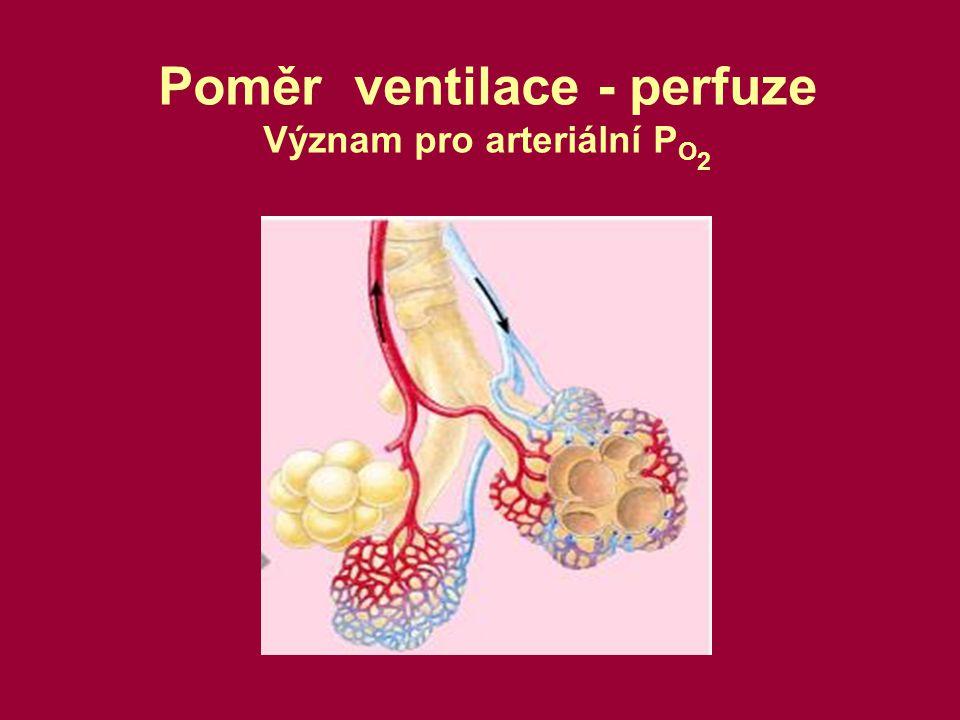 Poměr ventilace - perfuze Význam pro arteriální P O 2