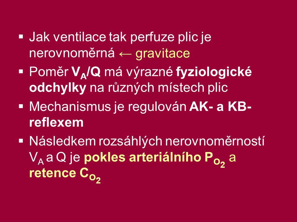  Jak ventilace tak perfuze plic je nerovnoměrná  Poměr V A /Q má výrazné fyziologické odchylky na různých místech plic  Mechanismus je regulován AK- a KB- reflexem  Následkem rozsáhlých nerovnoměrností V A a Q je pokles arteriálního P O 2 a retence C O 2 ← gravitace