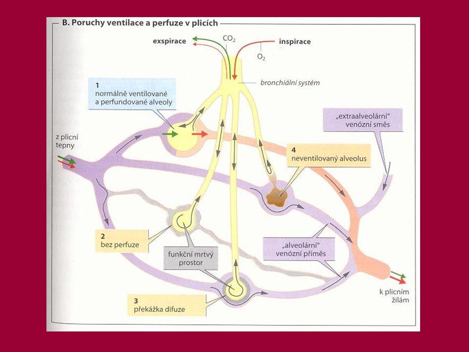 Zdroje  Ganong Wiliam F.:Přehled lékařské fyziologie; H&H 1993  Silbernagel Stefan, Despopoulos Agamemnon: Atlas fyziologie člověka; Grada Publishing 2004  Trojan Stanislav: Fyziologie; Avicenum 1988  www.ursa.kcom.edu  camelot.lf2.cuni.cz  www.lf3.cuni.cz/physio/Patophysiology  human.physiol.arizona.edu  www.lungusa.org