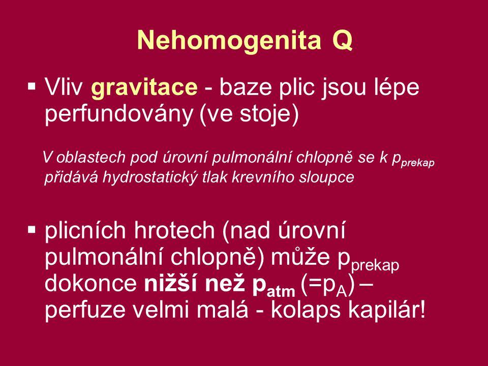 Nehomogenita Q  Vliv gravitace - baze plic jsou lépe perfundovány (ve stoje) V oblastech pod úrovní pulmonální chlopně se k p prekap přidává hydrostatický tlak krevního sloupce  plicních hrotech (nad úrovní pulmonální chlopně) může p prekap dokonce nižší než p atm (=p A ) – perfuze velmi malá - kolaps kapilár!