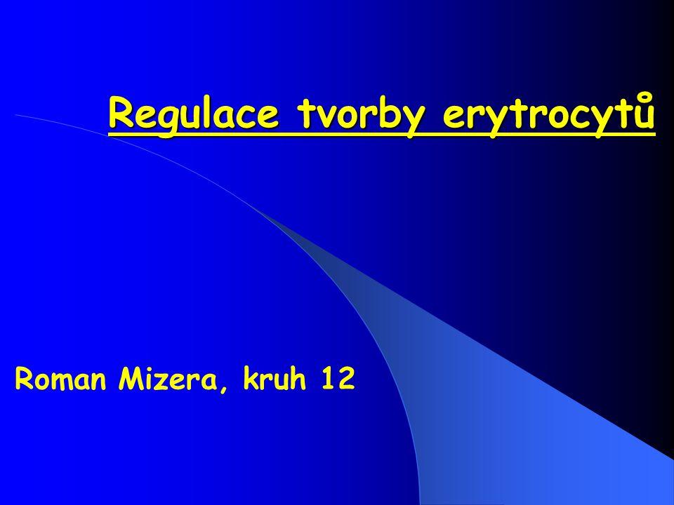 Regulace tvorby erytrocytů Roman Mizera, kruh 12