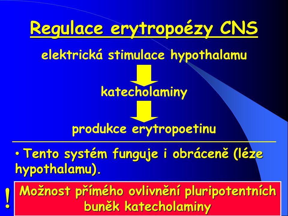 Regulace erytropoézy CNS elektrická stimulace hypothalamu katecholaminy produkce erytropoetinu Tento systém funguje i obráceně (léze hypothalamu). Ten