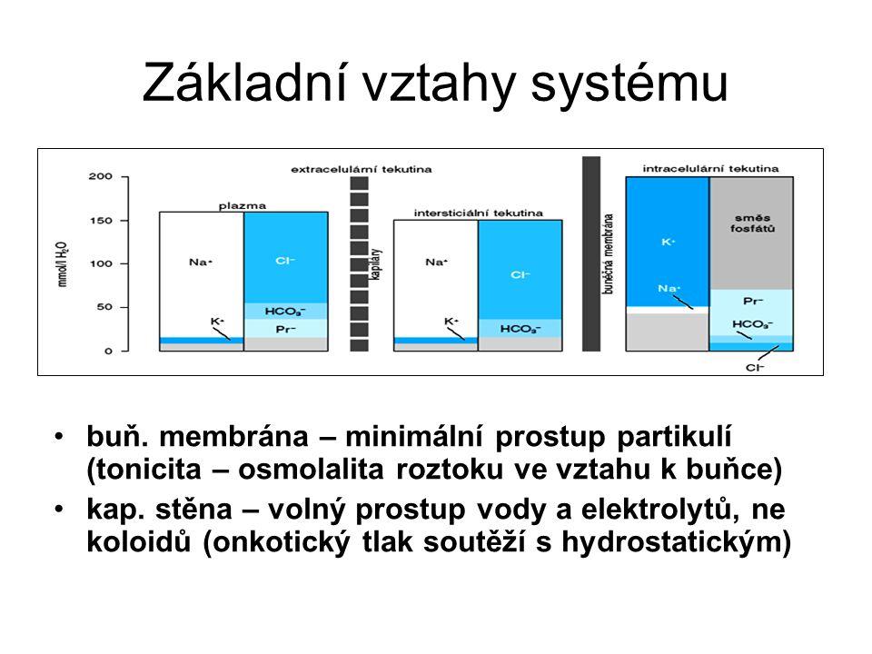 Základní vztahy systému buň.