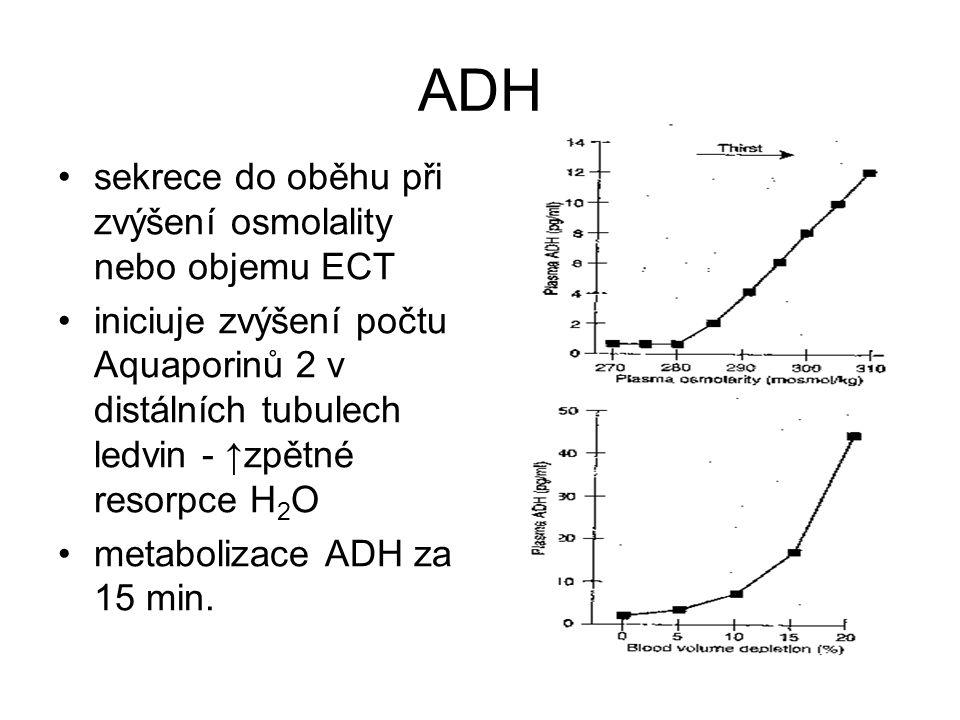 ADH sekrece do oběhu při zvýšení osmolality nebo objemu ECT iniciuje zvýšení počtu Aquaporinů 2 v distálních tubulech ledvin - ↑zpětné resorpce H 2 O metabolizace ADH za 15 min.