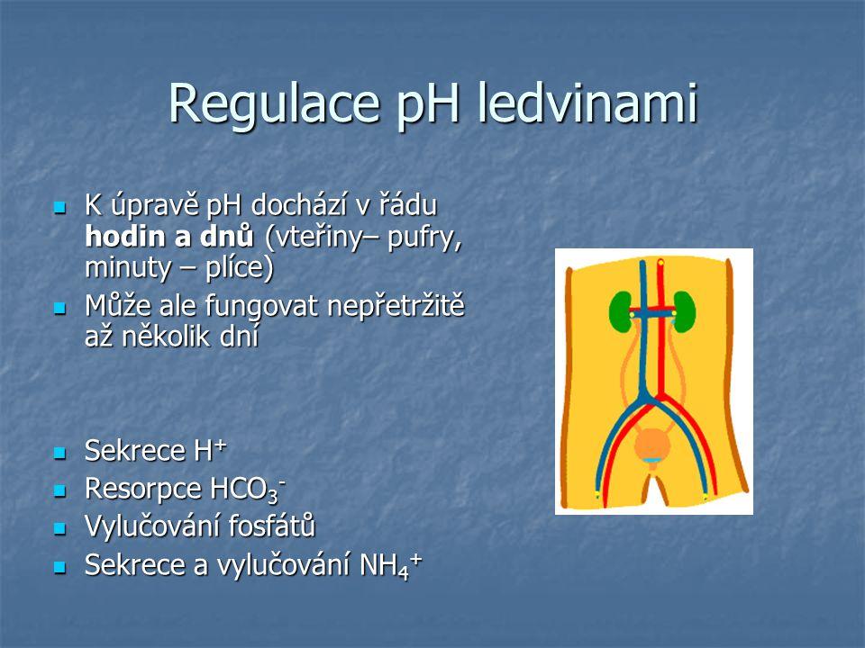 Regulace pH ledvinami K úpravě pH dochází v řádu hodin a dnů (vteřiny– pufry, minuty – plíce) K úpravě pH dochází v řádu hodin a dnů (vteřiny– pufry,