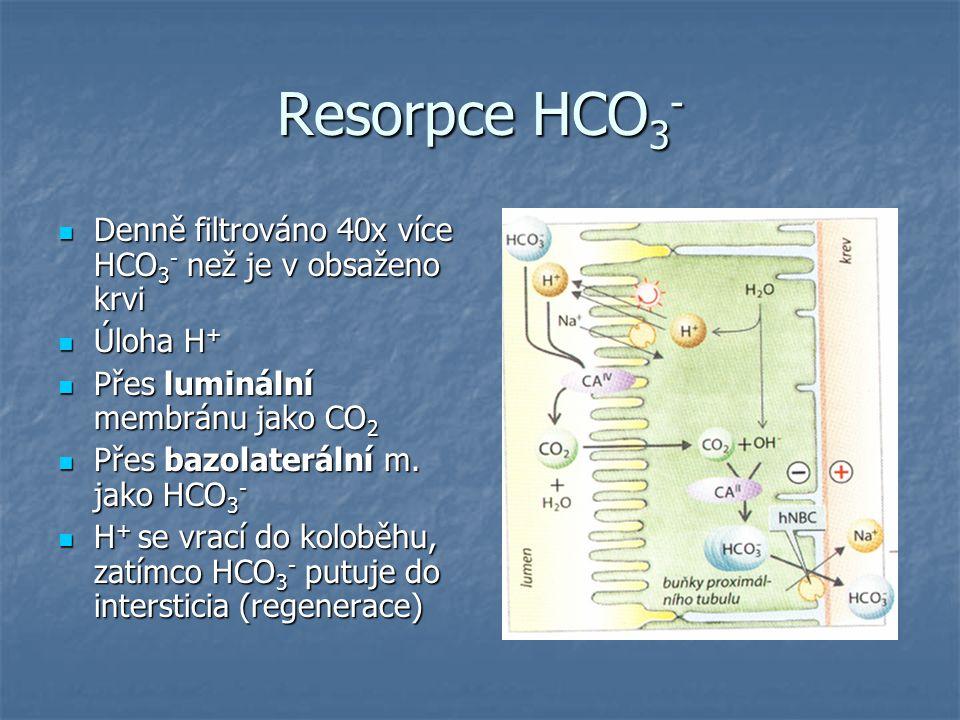 Resorpce HCO 3 - Denně filtrováno 40x více HCO 3 - než je v obsaženo krvi Denně filtrováno 40x více HCO 3 - než je v obsaženo krvi Úloha H + Úloha H +