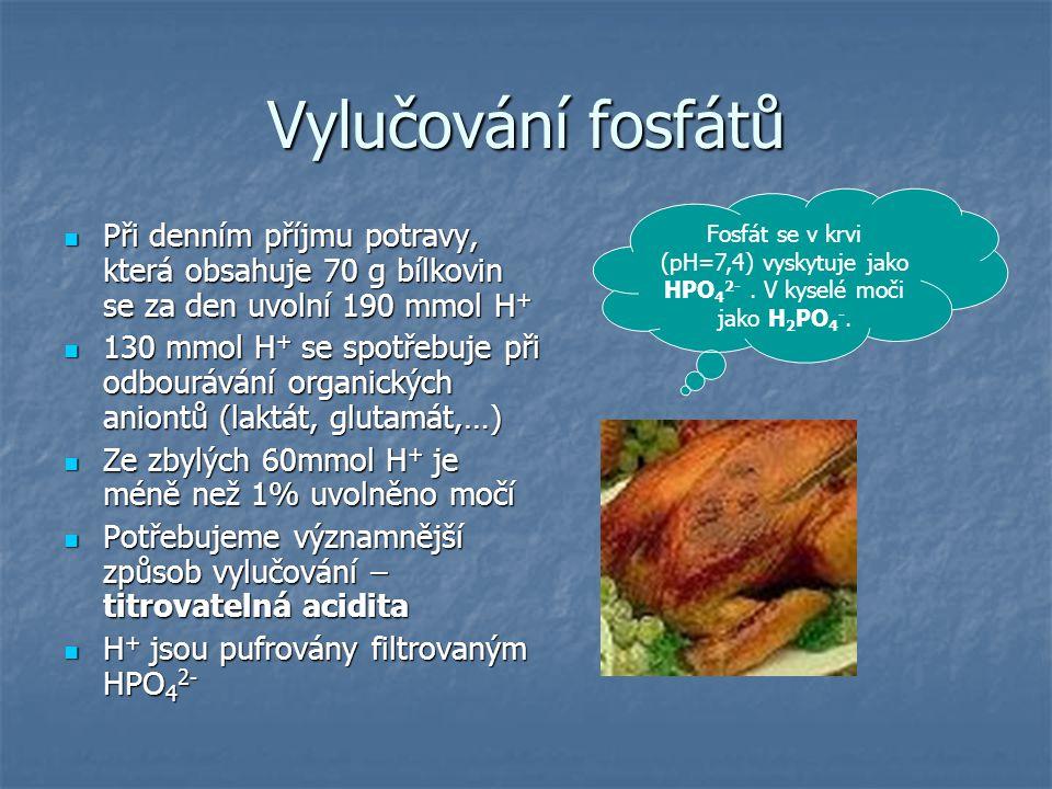 Vylučování fosfátů Při denním příjmu potravy, která obsahuje 70 g bílkovin se za den uvolní 190 mmol H + Při denním příjmu potravy, která obsahuje 70
