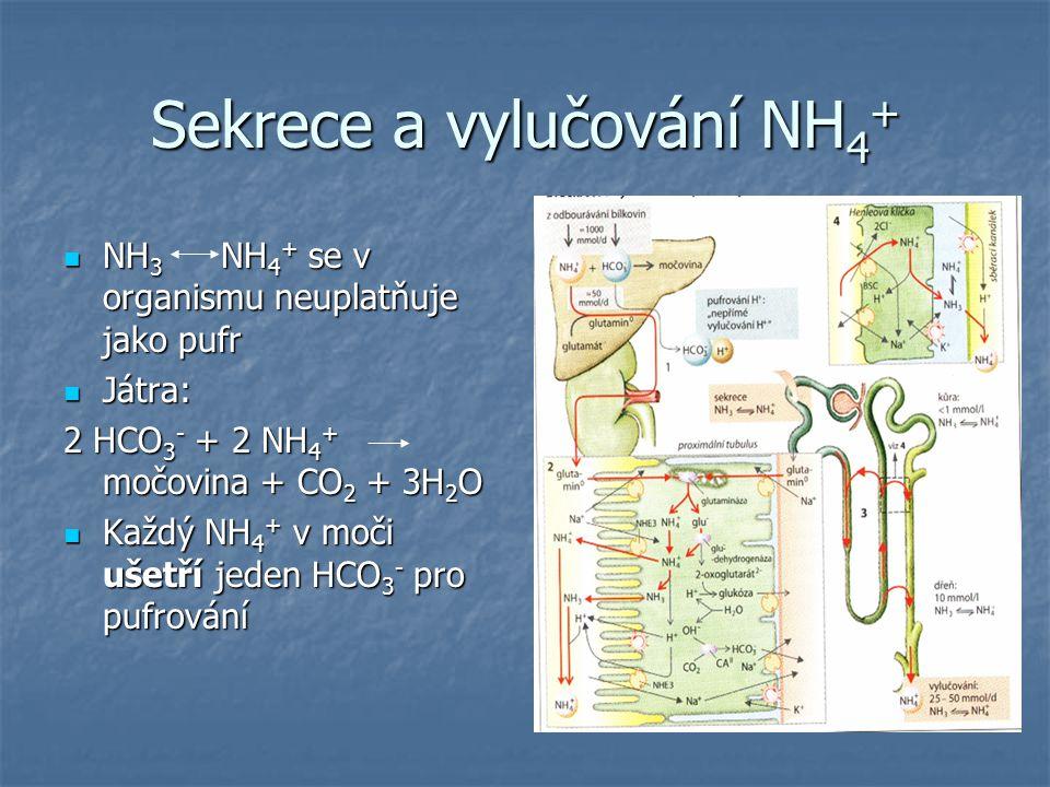 Sekrece a vylučování NH 4 + NH 3 NH 4 + se v organismu neuplatňuje jako pufr NH 3 NH 4 + se v organismu neuplatňuje jako pufr Játra: Játra: 2 HCO 3 -