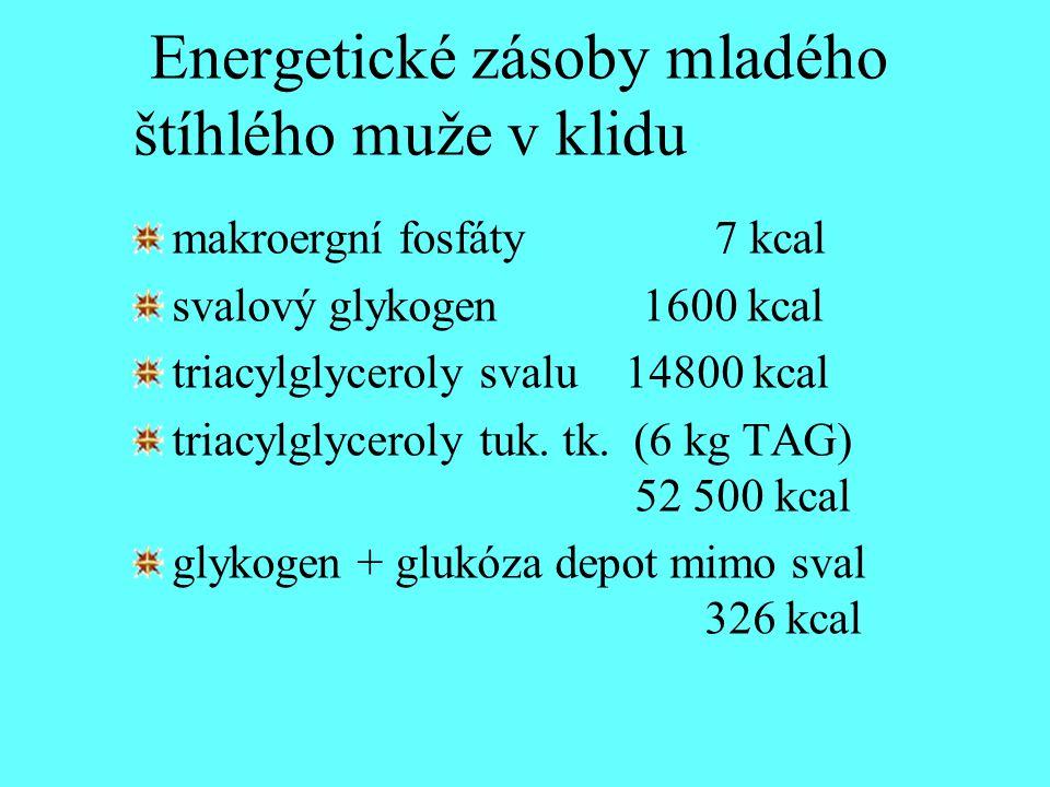 Energetické zásoby mladého štíhlého muže v klidu makroergní fosfáty 7 kcal svalový glykogen 1600 kcal triacylglyceroly svalu 14800 kcal triacylglycero