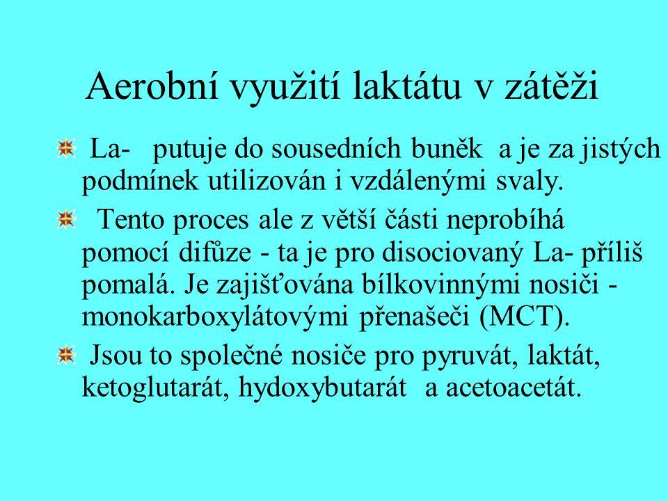 Aerobní využití laktátu v zátěži La- putuje do sousedních buněk a je za jistých podmínek utilizován i vzdálenými svaly. Tento proces ale z větší části