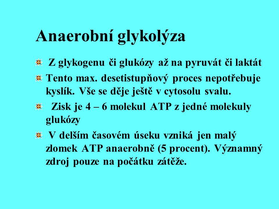 Anaerobní glykolýza Z glykogenu či glukózy až na pyruvát či laktát Tento max. desetistupňový proces nepotřebuje kyslík. Vše se děje ještě v cytosolu s