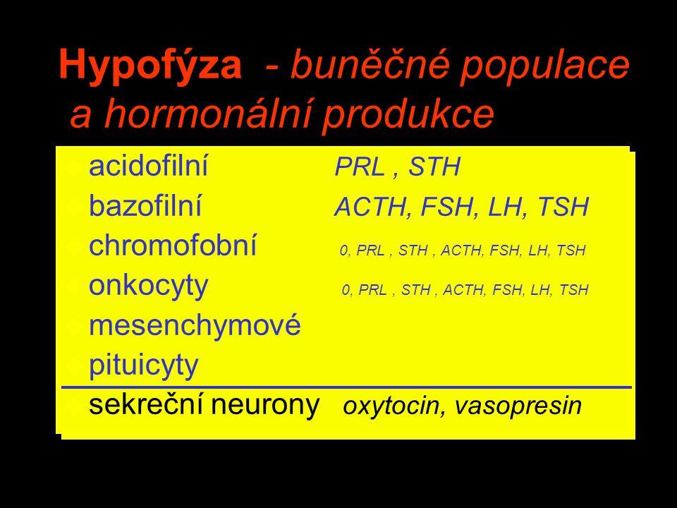 Hypofýza - buněčné populace a hormonální produkce u acidofilní PRL, STH u bazofilní ACTH, FSH, LH, TSH u chromofobní 0, PRL, STH, ACTH, FSH, LH, TSH u