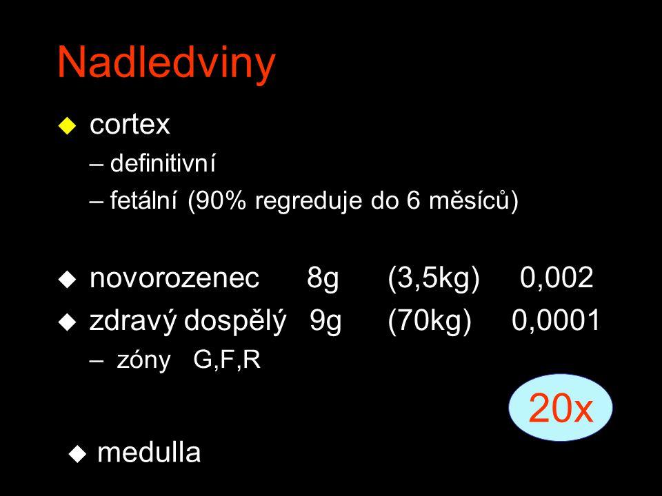 Nadledviny u cortex –definitivní –fetální (90% regreduje do 6 měsíců) u novorozenec 8g(3,5kg)0,002 u zdravý dospělý 9g(70kg) 0,0001 – zóny G,F,R 20x u