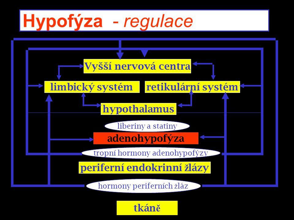 Hypofýza - regulace Vyšší nervová centra limbický systémretikulární systém hypothalamus periferní endokrinní ž lázy adenohypofýza tkán ě liberiny a st