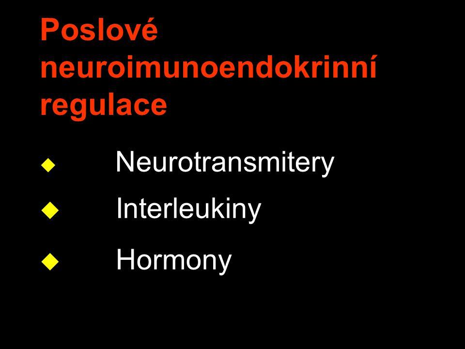 Hypofýza– hmotnost Rasmussen, AT Am.J.Anat.