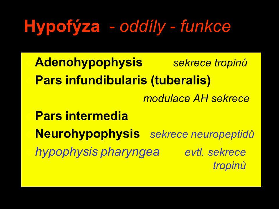 Hypofýza - oddíly - funkce u Adenohypophysis sekrece tropinů u Pars infundibularis (tuberalis) modulace AH sekrece u Pars intermedia u Neurohypophysis