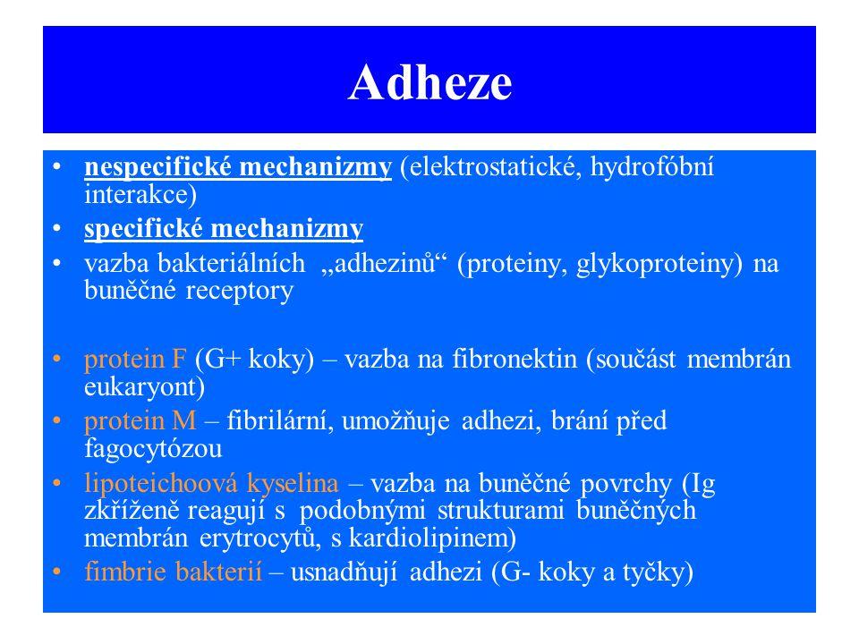 """Adheze nespecifické mechanizmy (elektrostatické, hydrofóbní interakce) specifické mechanizmy vazba bakteriálních """"adhezinů"""" (proteiny, glykoproteiny)"""