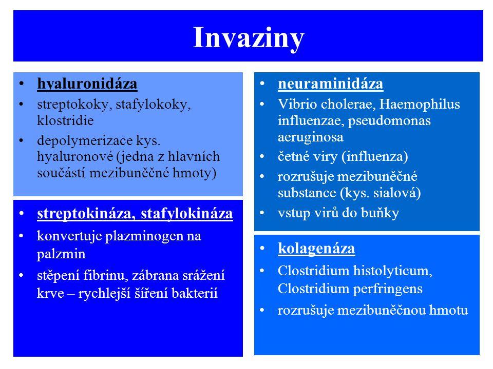 Invaziny hyaluronidáza streptokoky, stafylokoky, klostridie depolymerizace kys. hyaluronové (jedna z hlavních součástí mezibuněčné hmoty) neuraminidáz