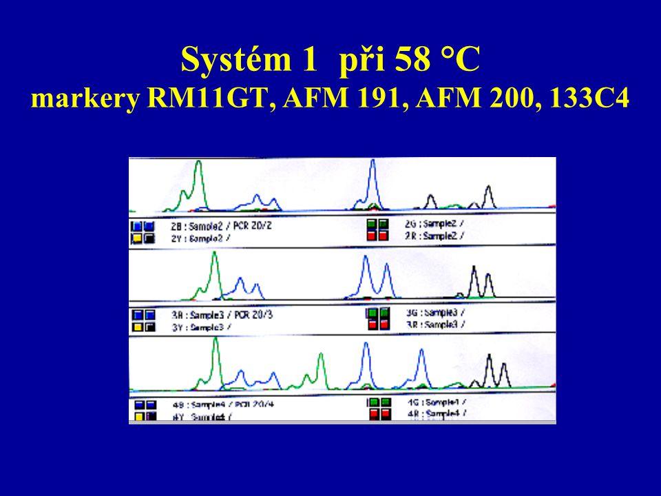 Systém 1 při 58 °C markery RM11GT, AFM 191, AFM 200, 133C4