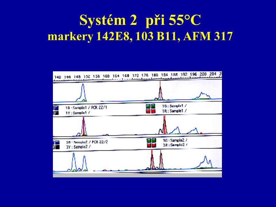 Systém 2 při 55°C markery 142E8, 103 B11, AFM 317