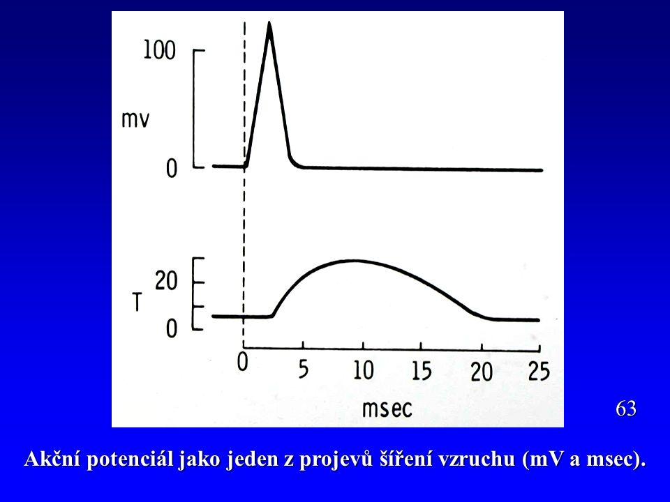 Akční potenciál jako jeden z projevů šíření vzruchu (mV a msec). 63