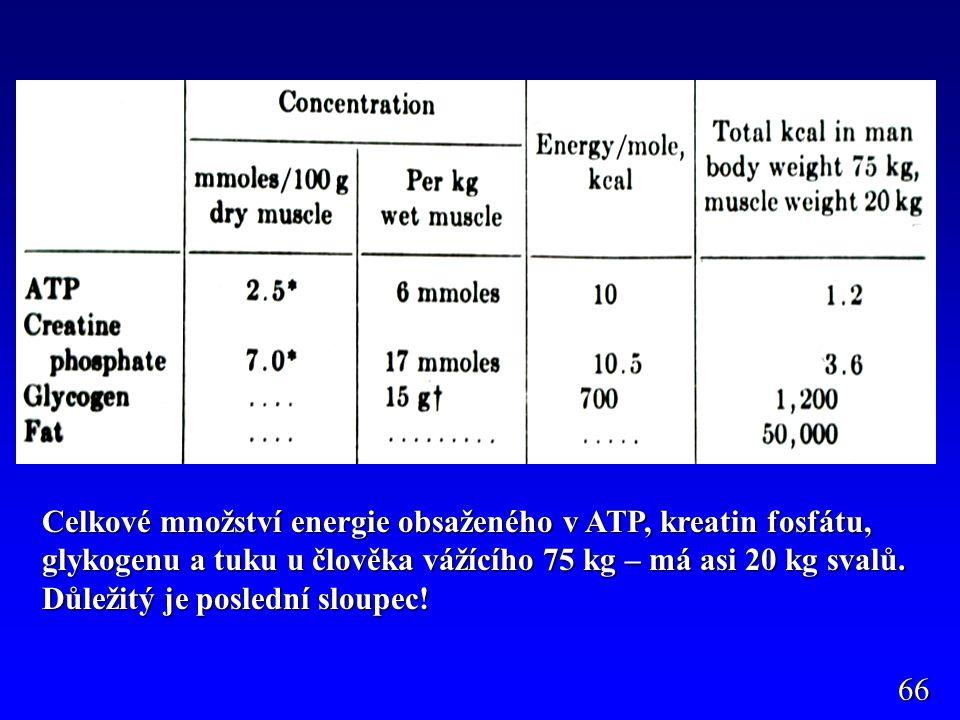 Celkové množství energie obsaženého v ATP, kreatin fosfátu, glykogenu a tuku u člověka vážícího 75 kg – má asi 20 kg svalů. Důležitý je poslední sloup