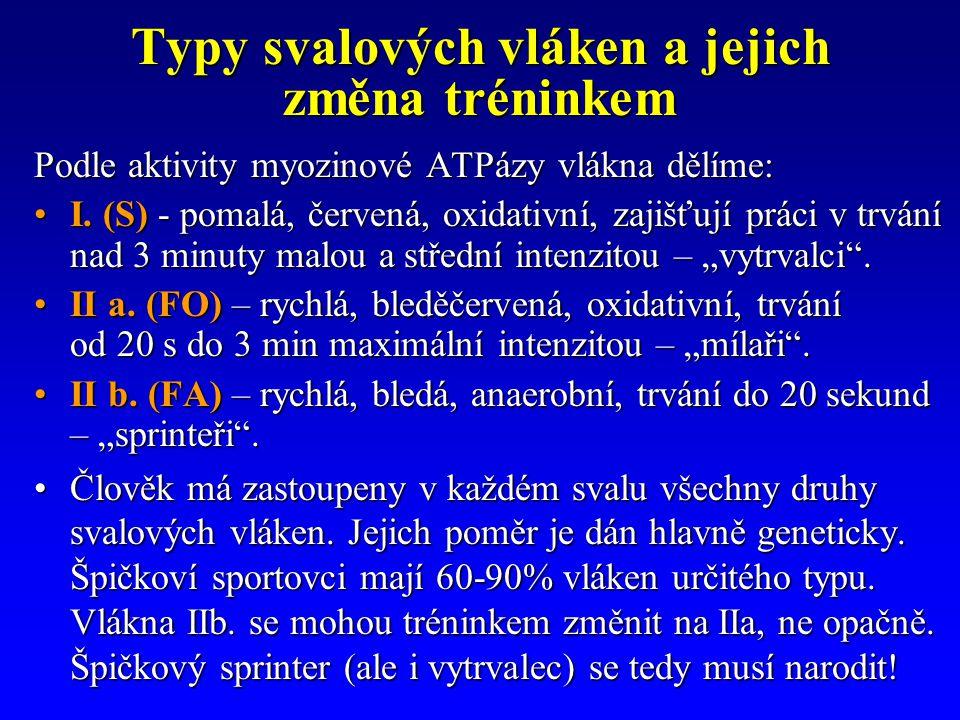 Typy svalových vláken a jejich změna tréninkem Podle aktivity myozinové ATPázy vlákna dělíme: I. (S) - pomalá, červená, oxidativní, zajišťují práci v