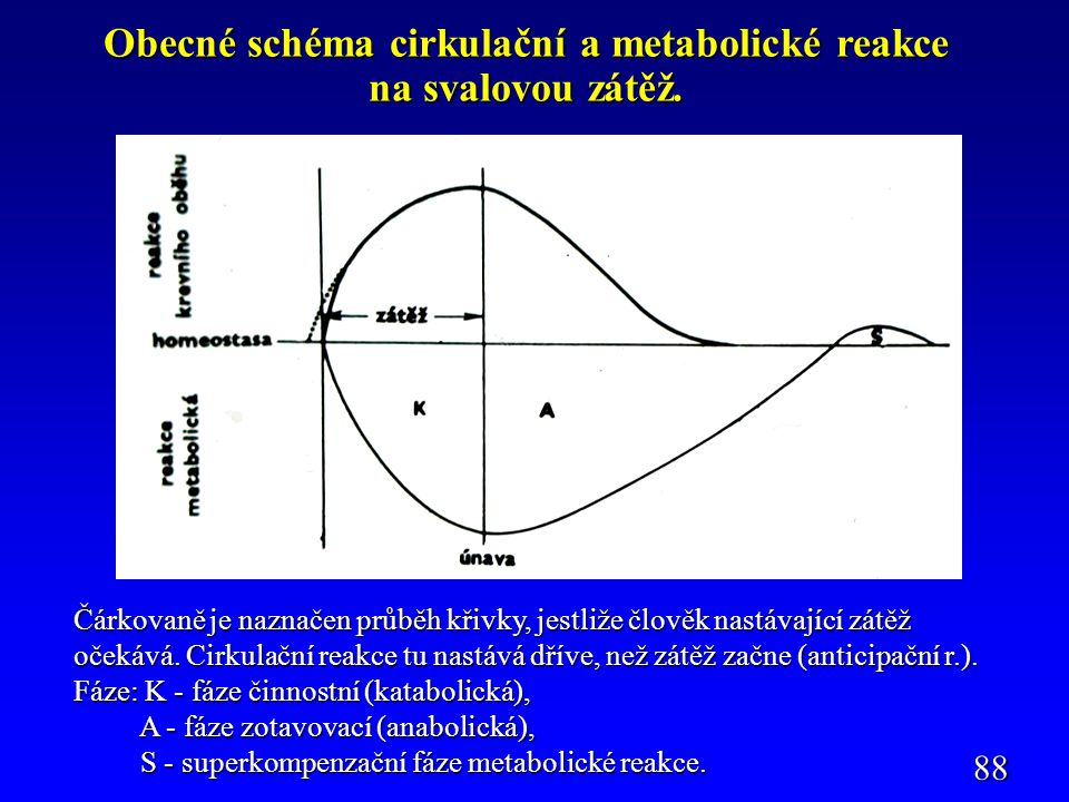 Propojení anaerobního a aerobního způsobu získávání energie pro svalový stah.