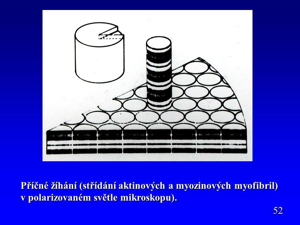 Příčné žíhání (střídání aktinových a myozinových myofibril) v polarizovaném světle mikroskopu). 52
