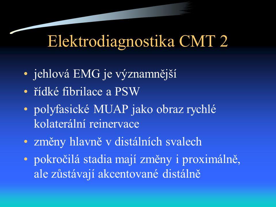 Elektrodiagnostika CMT 2 jehlová EMG je významnější řídké fibrilace a PSW polyfasické MUAP jako obraz rychlé kolaterální reinervace změny hlavně v distálních svalech pokročilá stadia mají změny i proximálně, ale zůstávají akcentované distálně