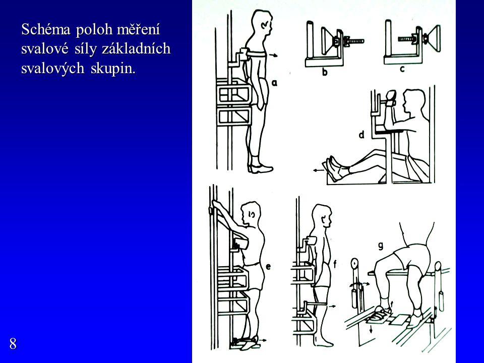 Schéma poloh měření svalové síly základních svalových skupin. 8