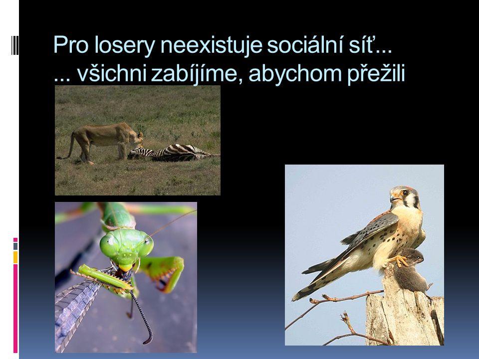 Pro losery neexistuje sociální síť...... všichni zabíjíme, abychom přežili