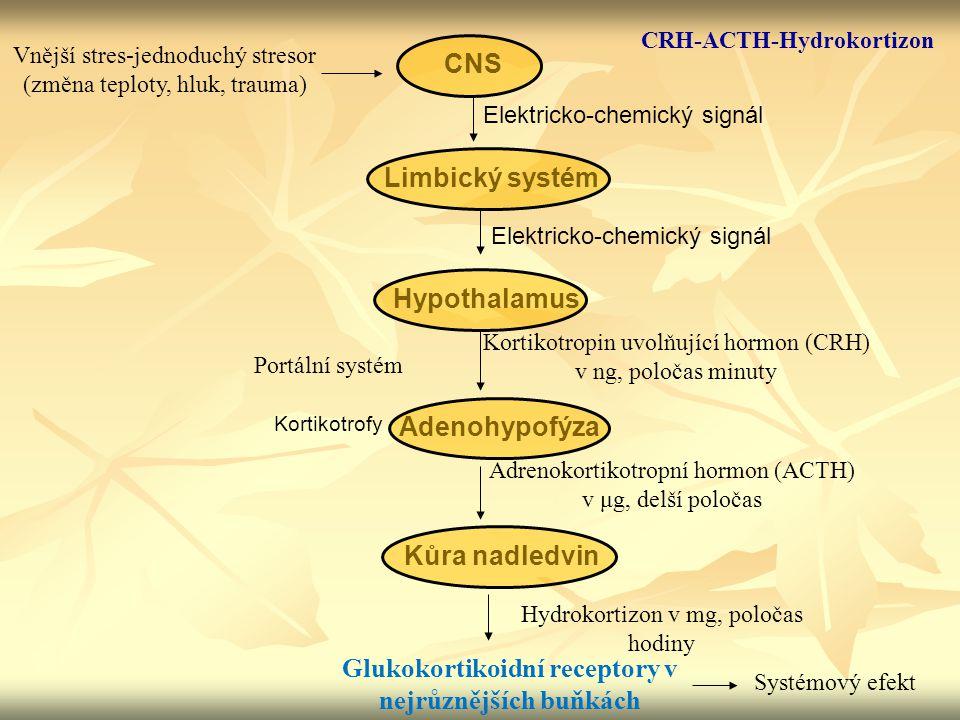 CNS Limbický systém Hypothalamus Adenohypofýza Kůra nadledvin Vnější stres-jednoduchý stresor (změna teploty, hluk, trauma) Elektricko-chemický signál