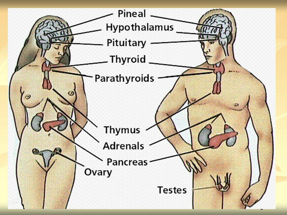 Účinek hormonů štítné žlázy Zvyšují syntézu bílkovin Zvyšují syntézu bílkovin Nezbytné pro normální vývoj CNS (zrání neuronů, tvorba myelinu, rozvoj kapilárního řečiště) Nezbytné pro normální vývoj CNS (zrání neuronů, tvorba myelinu, rozvoj kapilárního řečiště) Nedostatek po dokončení vývoje CNS – snížení výkonnosti CNS (útlum, spavost) Nedostatek po dokončení vývoje CNS – snížení výkonnosti CNS (útlum, spavost) Nezbytné pro vývoj kostí a zubů Nezbytné pro vývoj kostí a zubů Regulují oxidační reakce organismu Regulují oxidační reakce organismu Regulují metabolizmus základních živin, iontů, vody, vit.