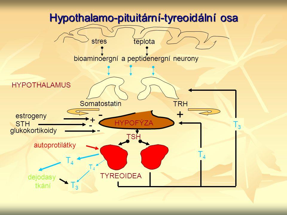 Hypothalamo-pituitární-tyreoidální osa stres teplota bioaminoergní a peptidenergní neurony HYPOTHALAMUS HYPOFÝZA Somatostatin - TRH + TYREOIDEA TSH T4
