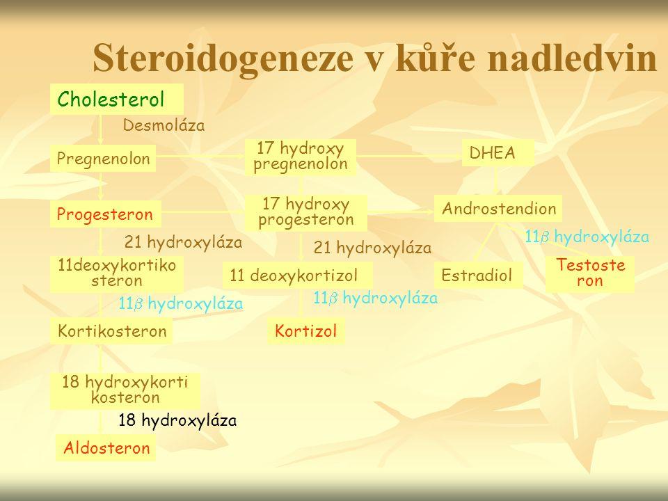 Cholesterol Pregnenolon Progesteron 11deoxykortiko steron Kortikosteron 18 hydroxykorti kosteron Aldosteron 17 hydroxy pregnenolon 17 hydroxy progeste