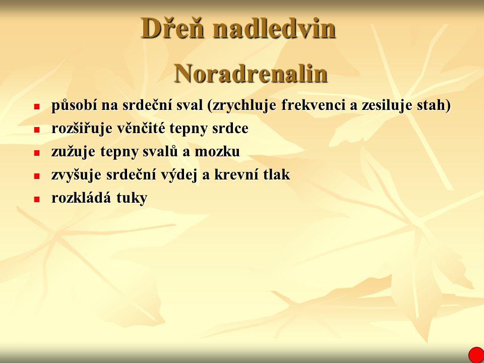 Dřeň nadledvin Noradrenalin působí na srdeční sval (zrychluje frekvenci a zesiluje stah) působí na srdeční sval (zrychluje frekvenci a zesiluje stah)