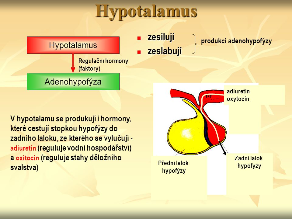10 Hypotalamus Příčiny poruch: tumor, trauma, kongenitální změny, poruchy prokrvení  hypotalamický hypopituitarismus = snížení všech hormonů hypofýzy, kromě prolaktinu  porucha sexuálního vyzrávání, případně porucha spermatogeneze a menstruačního cyklu  snížená odpověď na zátěž (stres)  hypotyreóza  poruchy růstu  galactorhea (nadbytek PRL)  diabetes insipidus  hypotalamická hypotyreóza  Kallmanův syndrom (izolovaný deficit gonadotropinů a GHRH)  centrální diabetes insipidus