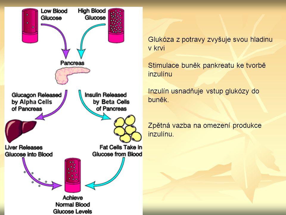 Glukóza z potravy zvyšuje svou hladinu v krvi Stimulace buněk pankreatu ke tvorbě inzulínu Inzulín usnadňuje vstup glukózy do buněk. Zpětná vazba na o