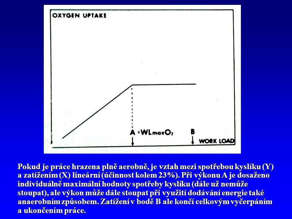 Pokud je práce hrazena plně aerobně, je vztah mezi spotřebou kyslíku (Y) a zatížením (X) lineární (účinnost kolem 23%). Při výkonu A je dosaženo indiv