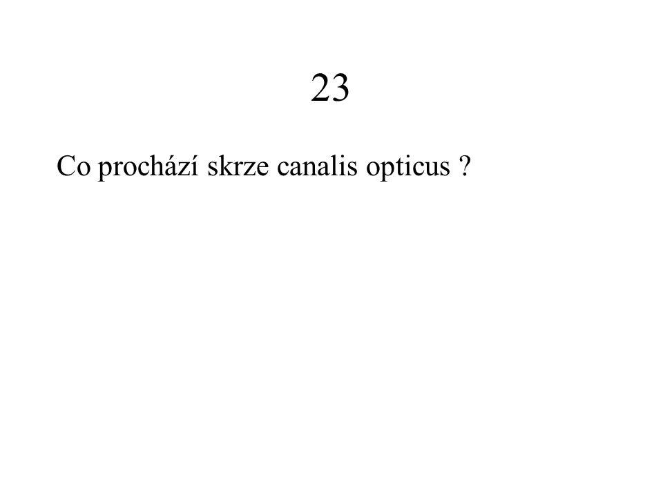 23 Co prochází skrze canalis opticus ?