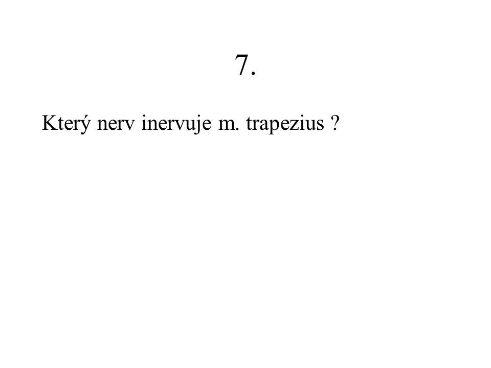 7. Který nerv inervuje m. trapezius ?