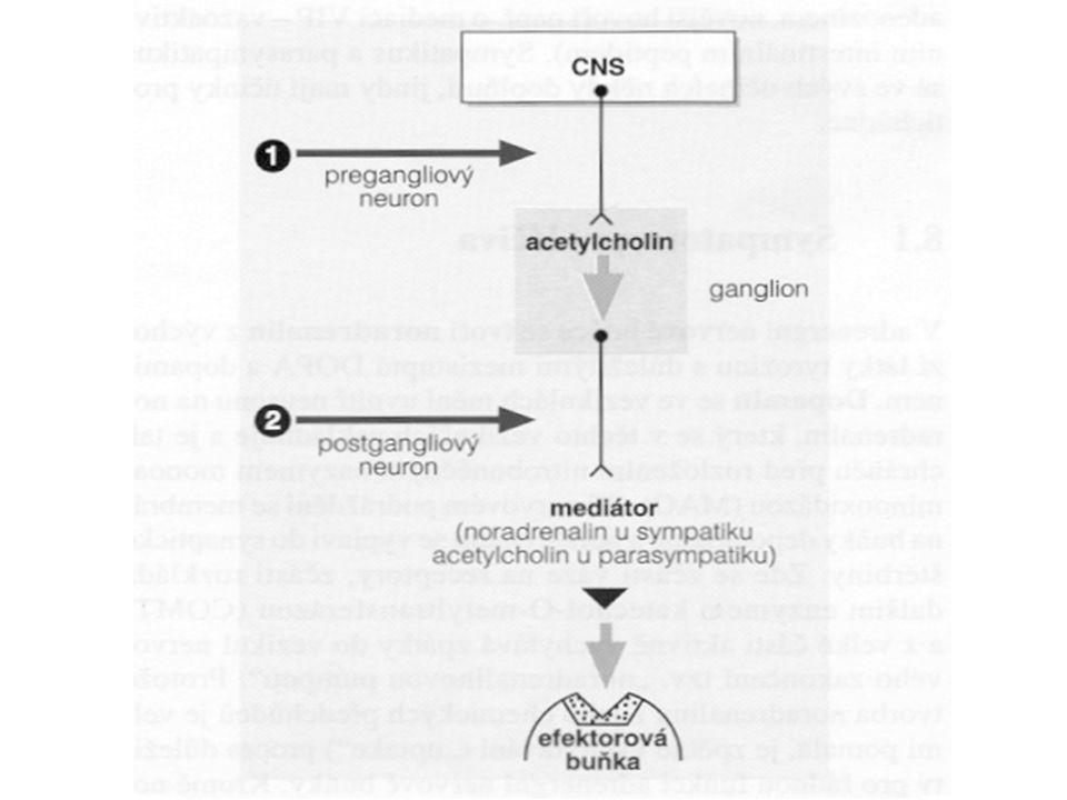 Symptomy intoxikace jsou snadno predikovatelné podle účinků ACH a jejich projevy závisí na selektivitě farmak: z nadměrné stimulace až excitace M receptorů vyplývá stimulace CNS, mióza, akomodace do blízka, dyspnoe (bronchokonstrikce, hypersekrece bronchiálních žlaz), průjem (hypermotilita a hypersekrece v GIT), sklon k hypotenzi (vazodilatace), bradykardie.