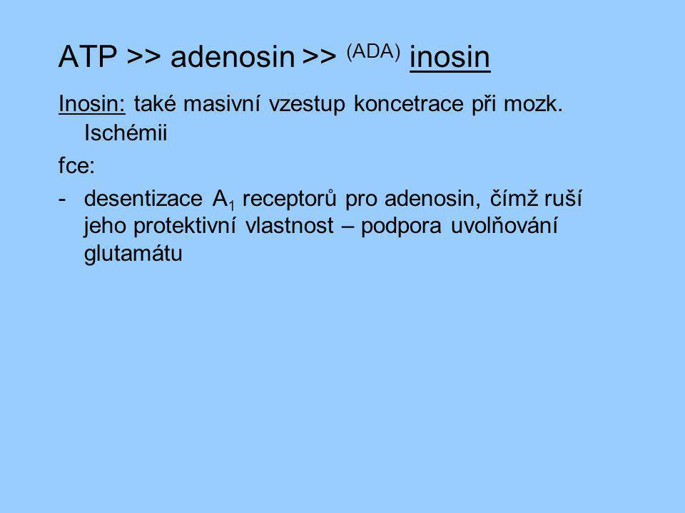 ATP >> adenosin >> (ADA) inosin Inosin: také masivní vzestup koncetrace při mozk. Ischémii fce: -desentizace A 1 receptorů pro adenosin, čímž ruší jeh