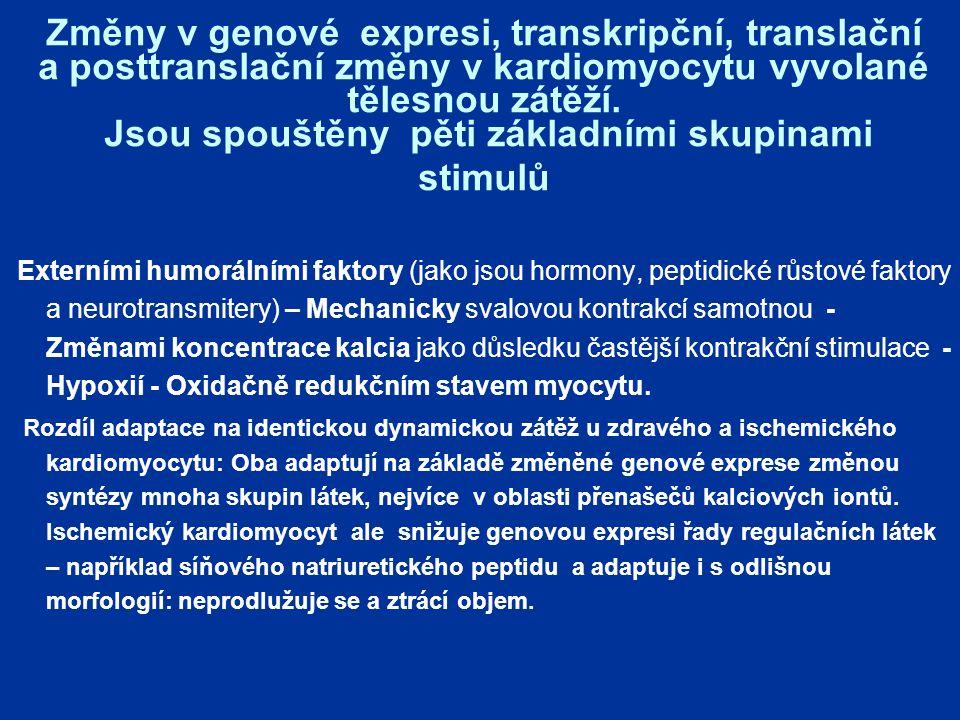 Změny v genové expresi, transkripční, translační a posttranslační změny v kardiomyocytu vyvolané tělesnou zátěží.