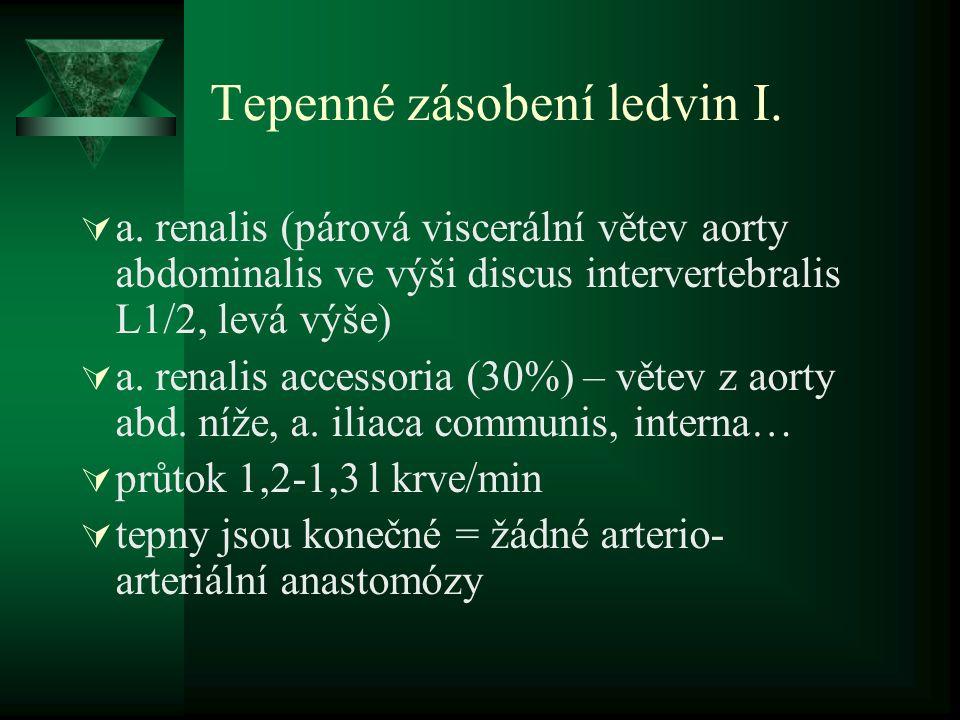 Tepenné zásobení ledvin I. a.