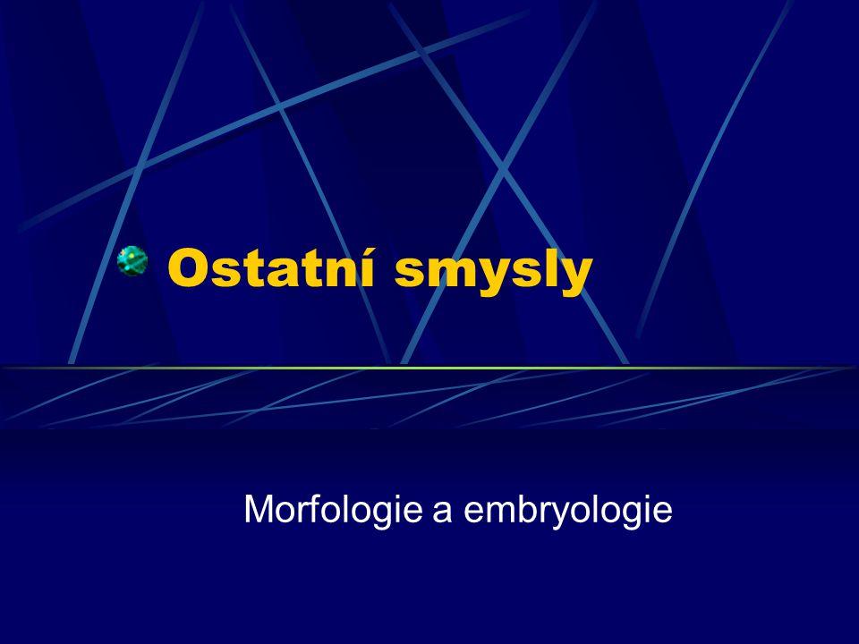 Ostatní smysly Morfologie a embryologie