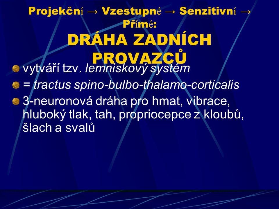 Projekčn í → Vzestupn é → Senzitivn í → Př í m é : DRÁHA ZADNÍCH PROVAZCŮ vytváří tzv. lemniskový systém = tractus spino-bulbo-thalamo-corticalis 3-ne