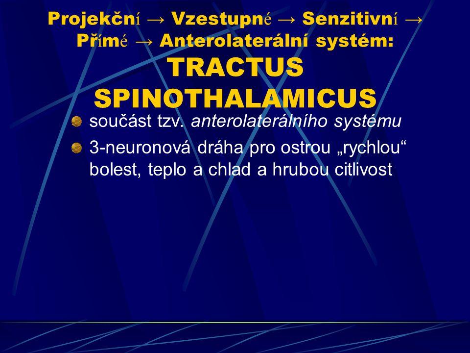 Projekčn í → Vzestupn é → Senzitivn í → Př í m é → Anterolaterální systém: TRACTUS SPINOTHALAMICUS součást tzv. anterolaterálního systému 3-neuronová