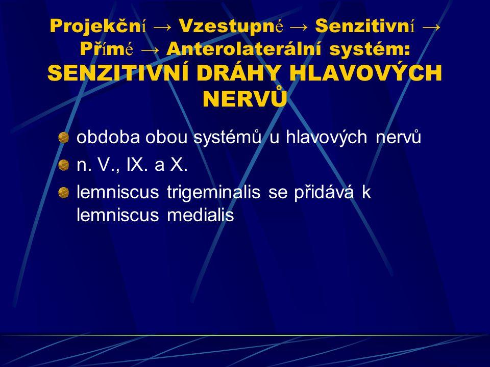 Projekčn í → Vzestupn é → Senzitivn í → Př í m é → Anterolaterální systém: SENZITIVNÍ DRÁHY HLAVOVÝCH NERVŮ obdoba obou systémů u hlavových nervů n. V
